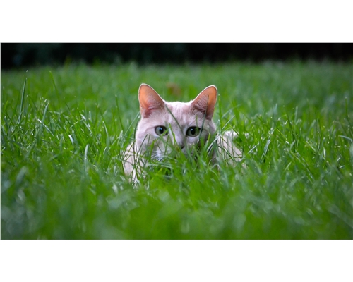 What to do if you find a dead cat | What to do next | Cats Protection