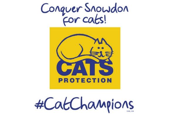 Climb Snowdon for cats