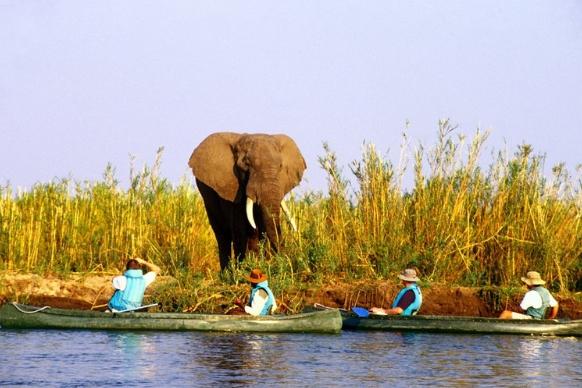 Zambia canoes and elephant