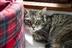 Cat Homing Show in Benfleet
