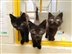 Cash for the Kitty Pets at Home charity weekend