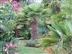 Open garden at Cottesmore Farm