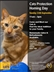 Haslemere Cats Protection Homing Day