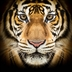 Himalaya Trek and Tiger Conservation Expereince - 13-25th October 2018