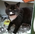 Cat Homing Show in Canvey