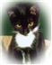 Cat Adoption Day at Caerwent Village hall, Highfields, Caerwent NP26 5BJ