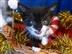 Kenton Christmas Fayre