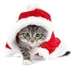 Cats Protection Christmas Bazaar!