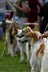Stockport Cats Protection Dog Show