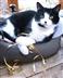 Cambridge Cats Protection at Bottisham Community Fete