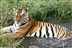 Nepal Trek and Tiger Conservation Experience