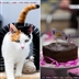 Pawsome Afternoon Tea event - created by you!