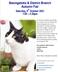 Basingstoke & District Cats Protection Autumn Fair