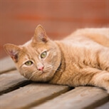 Ginger cat relaxing