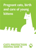 Pregnant cats, birth and the care of young kittens cover