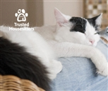 TrustedHousesitters logo and b/w cat