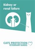 Kidney leaflet cover