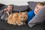 cats and your family