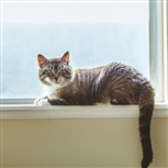 tabby cat on window