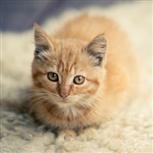 Kitten neutering kitten