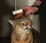 Happy cat being groomed