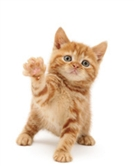 A ginger kitten waving