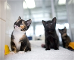 kittens in cats protection centre