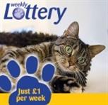 Lottery kitten