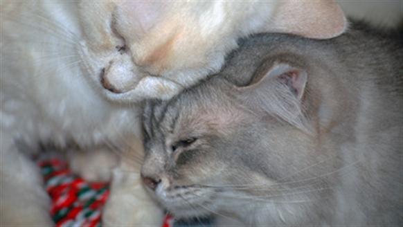 Cats rubbing