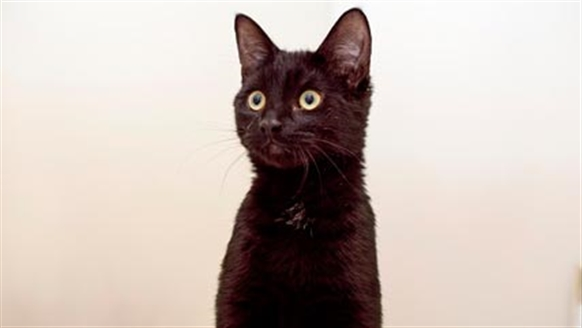 Black cat looking attentive