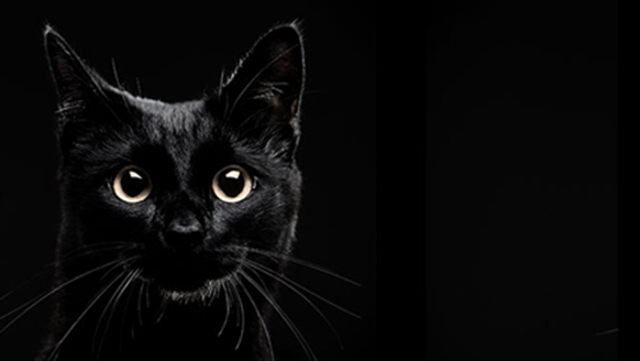 Cats Protection National Black Cat Day