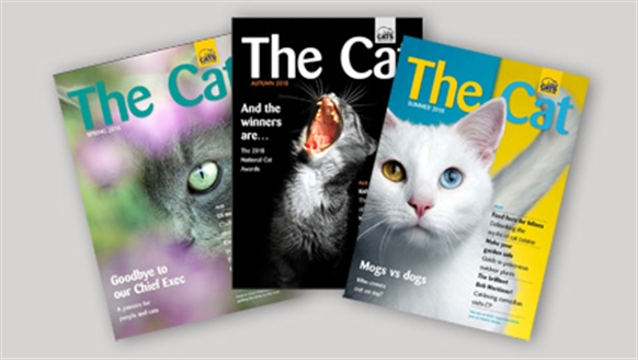 The Cat magazine covers