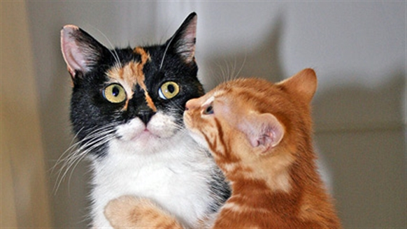 Two chatting cats
