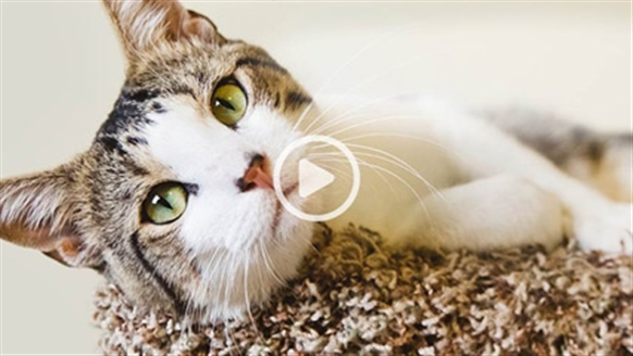 Cats Protection | Cat care