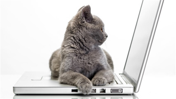 Grey cat sat on a laptop