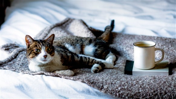 cat laying down with coffee cup and book