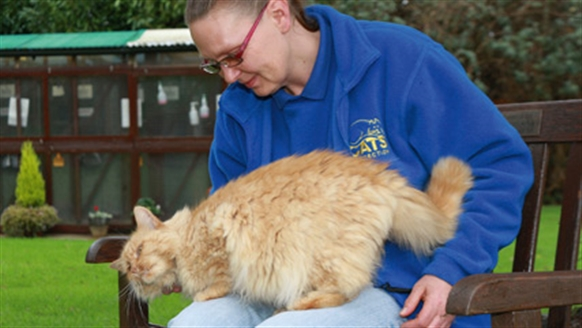 Ginger cat enjoying a fuss