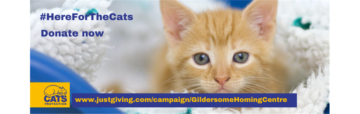 Welcome To Gildersome Cats Protection