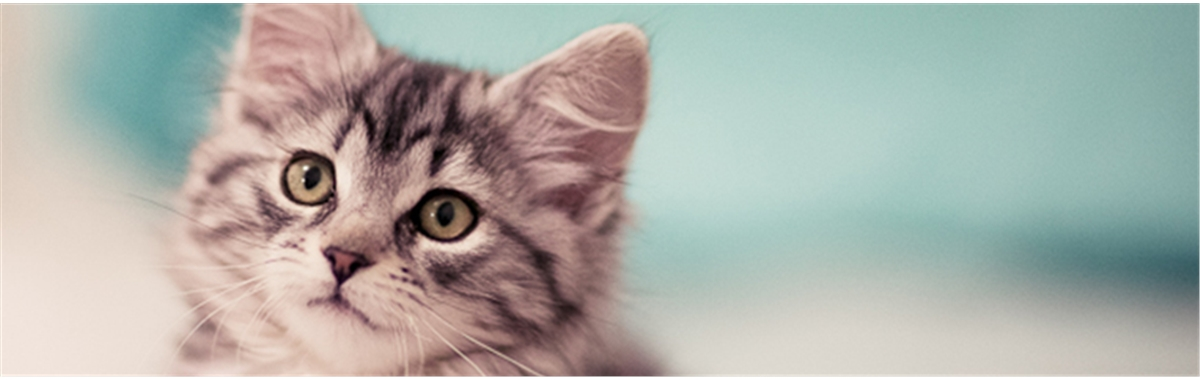 how to find out if your kitten has fleas