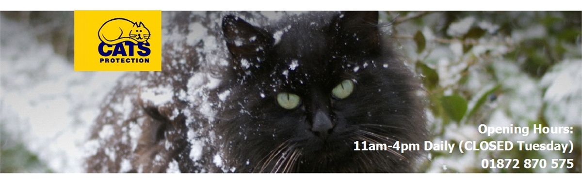 Cats Protection Lost And Found Cornwall