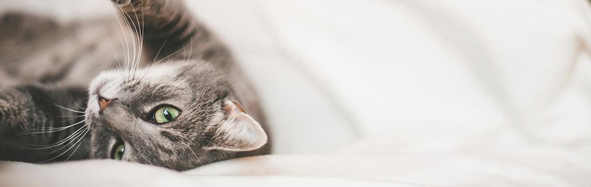 Cat lovers dating site uk professionals