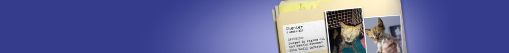 Will you help a cat like Chester? Become a Sponsor today