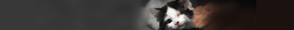 Our vision is a world where every cat is treated with kindness and an understanding of its needs