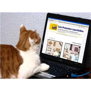 Free e-learning course understanding feline origins now available