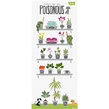 PLANTS THAT ARE POISONOUS TO CATS