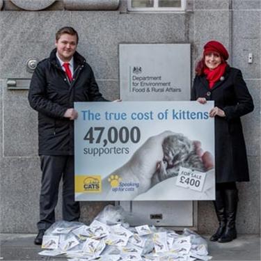 Kitten Campaign Success