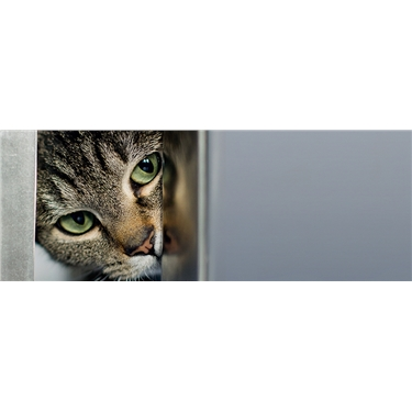 Membership - Bedford & Biggleswade Cats Protection