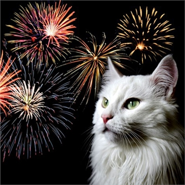 A Feline Friendly Bonfire Night