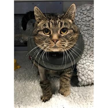 Meet Mo our sponsor cat