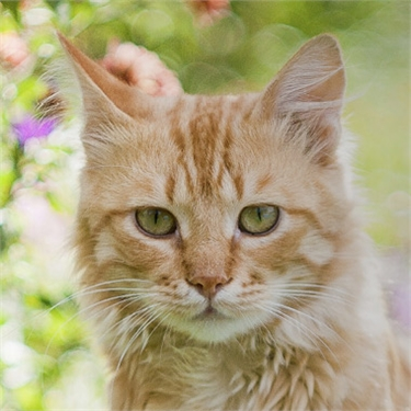 Feline-friendly advice at gardening shows